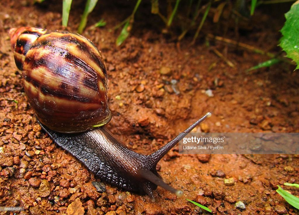 Close-Up Of Snail On Field : Stock Photo