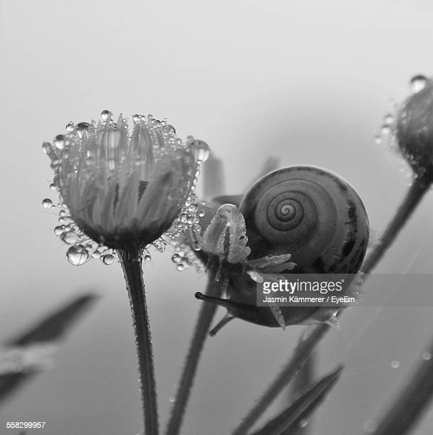Close-Up Of Snail On Flower