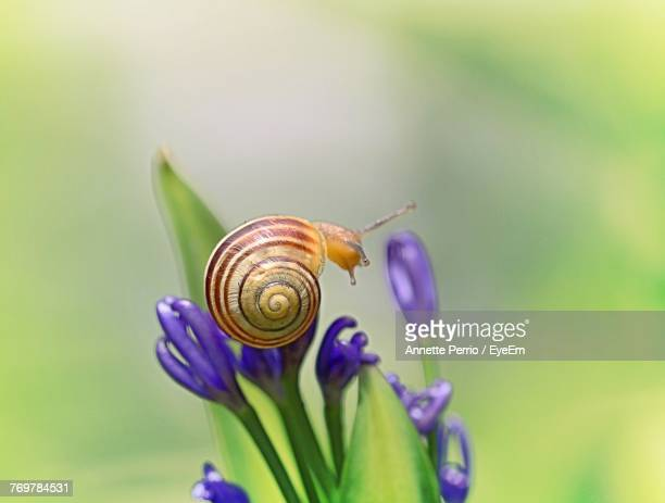 close-up of snail on flower - snail stock photos and pictures