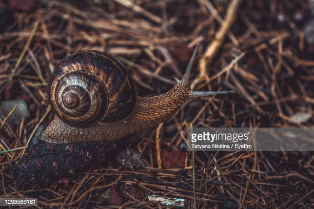close-up of snail on land - nikitina stock pictures, royalty-free photos & images