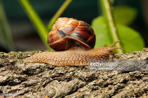 close-up of snail on leaf - invertebrate stock pictures, royalty-free photos & images