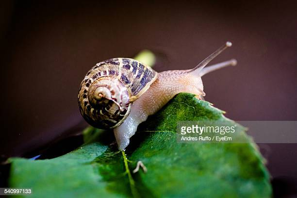 close-up of snail on leaf - andres ruffo stock-fotos und bilder