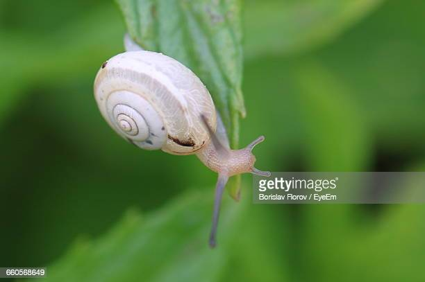 close-up of snail on leaf - one animal stock pictures, royalty-free photos & images