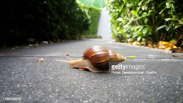 close-up of snail on road - snail stock pictures, royalty-free photos & images