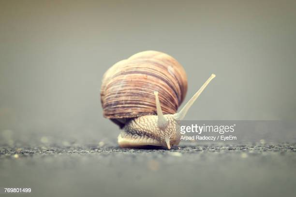 close-up of snail on road - snail stock photos and pictures