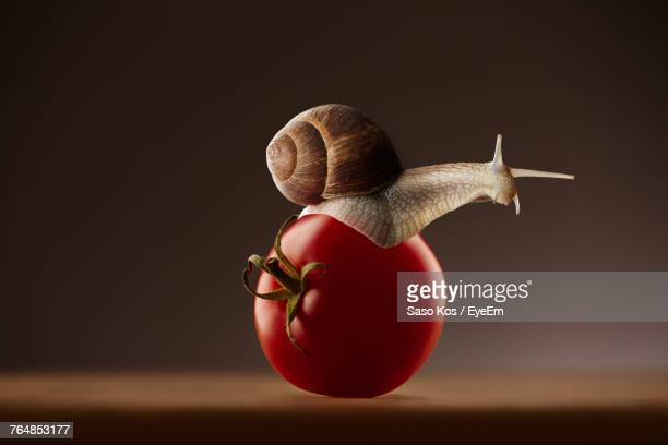 Close-Up Of Snail On Tomato Over Table