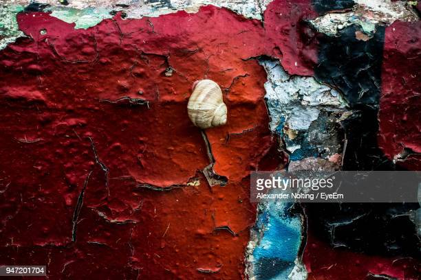 Close-Up Of Snail On Weathered Wall