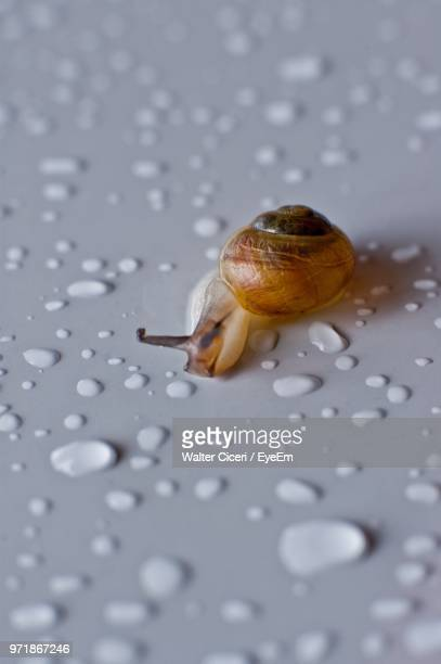 close-up of snail on wet table - walter ciceri foto e immagini stock