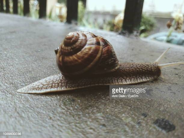 close-up of snail on wet walkway - anri stock pictures, royalty-free photos & images