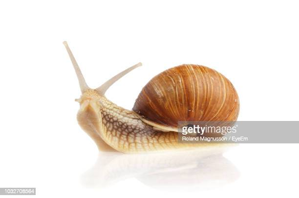 close-up of snail on white background - snail stock pictures, royalty-free photos & images