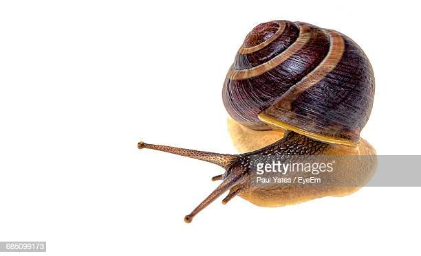 close-up of snail on white background - snail stock photos and pictures