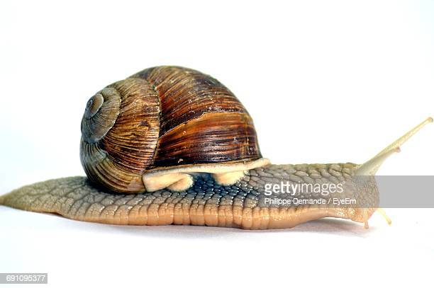 Close-Up Of Snail On White Background