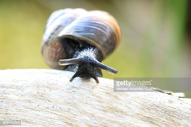 close-up of snail on wood - michael hruschka stock pictures, royalty-free photos & images