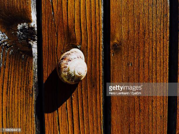 close-up of snail on wooden door - lienhard stock pictures, royalty-free photos & images