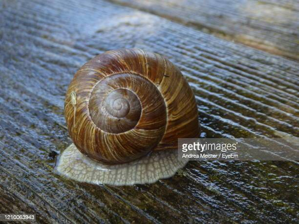 close-up of snail - invertebrate stock pictures, royalty-free photos & images