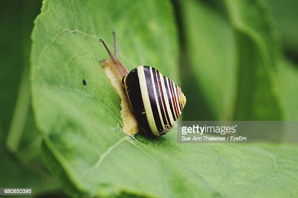 close-up of snail with striped shell - eén dier stockfoto's en -beelden