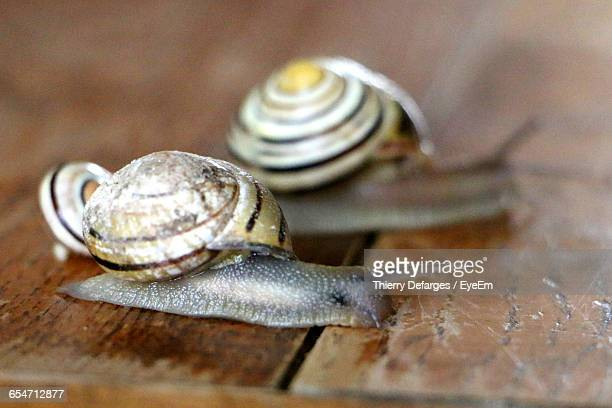 Close-Up Of Snails On Table