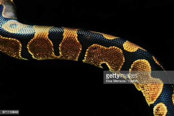 close-up of snake against black background - snake stock pictures, royalty-free photos & images