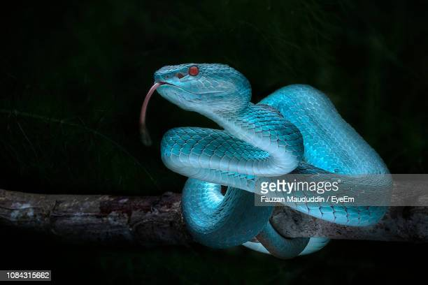 close-up of snake at night - rettile foto e immagini stock