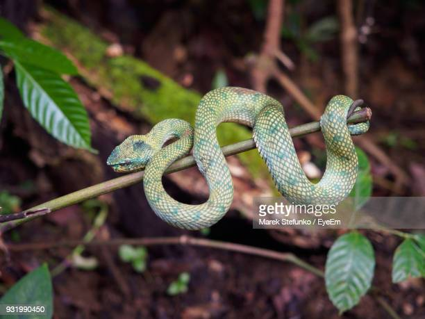 close-up of snake on branch - marek stefunko stock pictures, royalty-free photos & images
