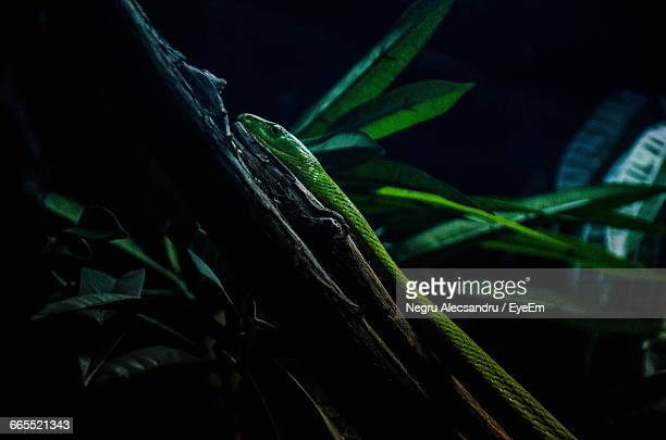 Close-Up Of Snake On Tree In Forest