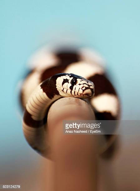 Close-Up Of Snake On Wooden Stick