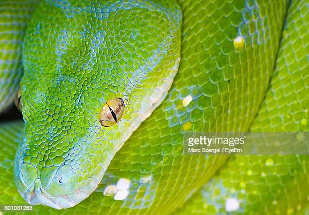 Close-Up Of Snake Outdoors