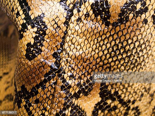 close-up of snake - animal pattern stock pictures, royalty-free photos & images
