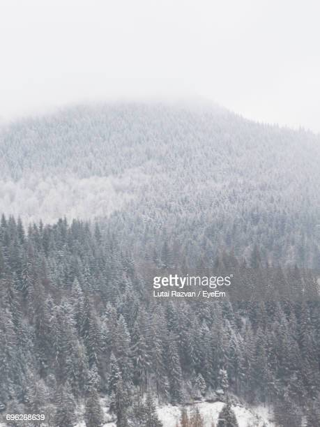 close-up of snow covered landscape against clear sky - lutai razvan stock pictures, royalty-free photos & images