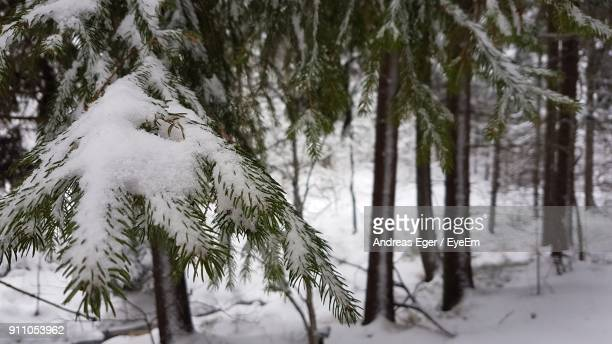 Close-Up Of Snow Covered Trees