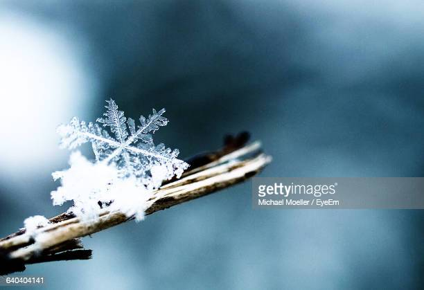 Close-Up Of Snow Flake On Plant