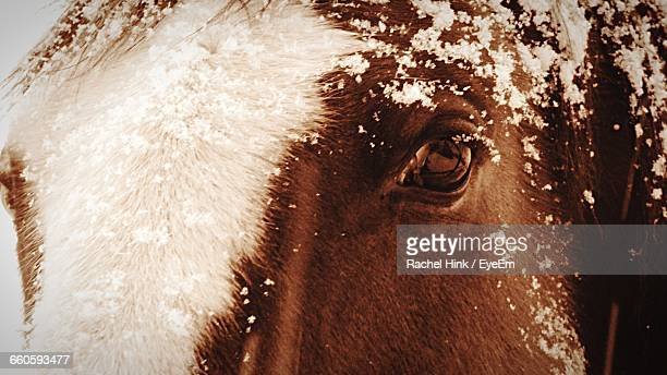 Close-Up Of Snow On Horse