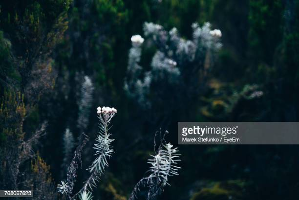 close-up of snow on plant - marek stefunko stock photos and pictures