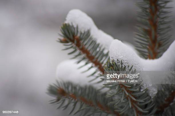 close-up of snow on plant - deep snow stock pictures, royalty-free photos & images