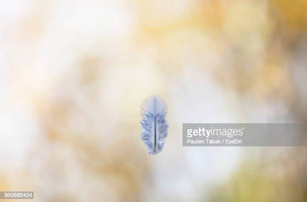 close-up of snow - paulien tabak stock pictures, royalty-free photos & images