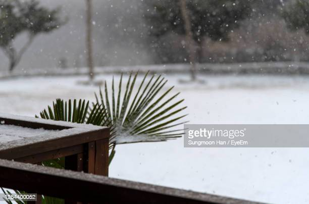 close-up of snowing outdoor during winter season - gwangju stock pictures, royalty-free photos & images