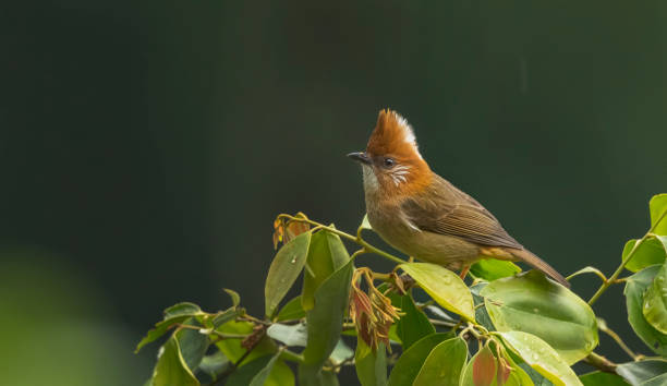 Close-up of songtropical bird perching on plant,Neora Valley National Park,India