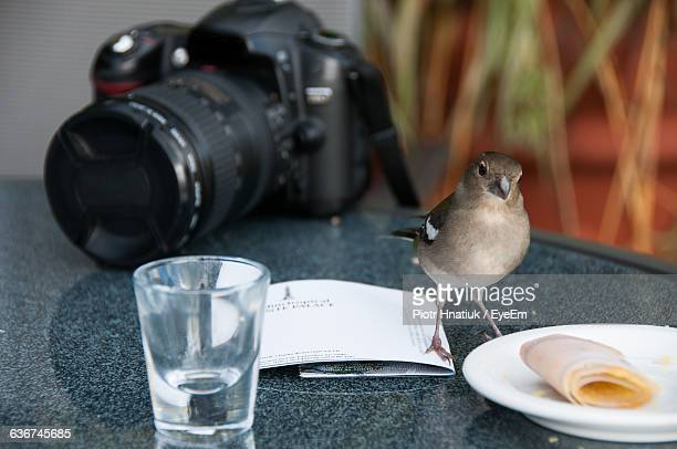 close-up of sparrow by plate with camera on table - piotr hnatiuk imagens e fotografias de stock
