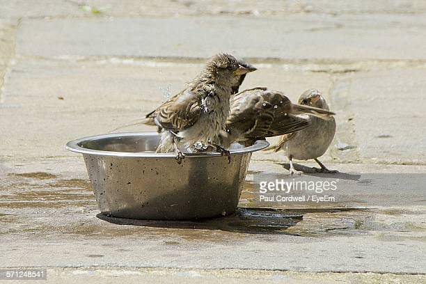 Close-Up Of Sparrow On Container At Floor