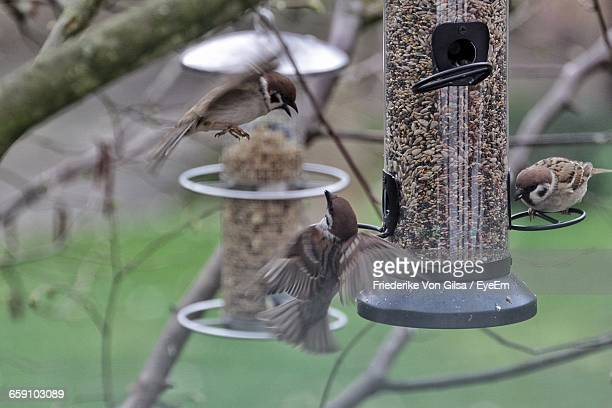 Close-Up Of Sparrows Perching On Feeder