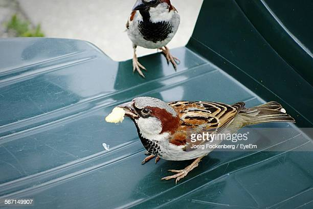 Close-Up Of Sparrows Perching On Plastic Chair