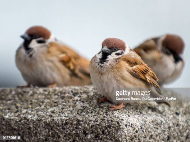 Close-Up Of Sparrows Perching Outdoors