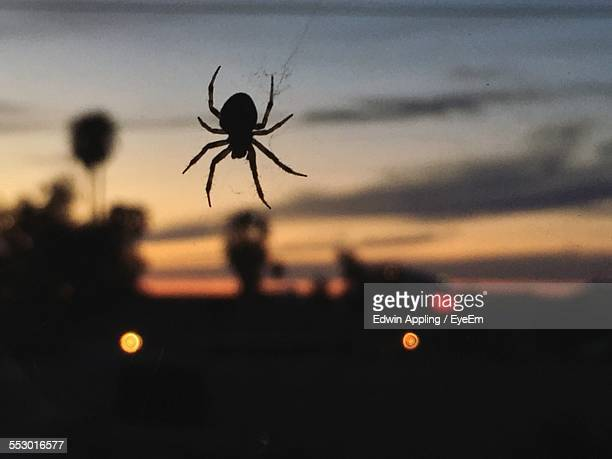 Close-Up Of Spider Against Blurred Background