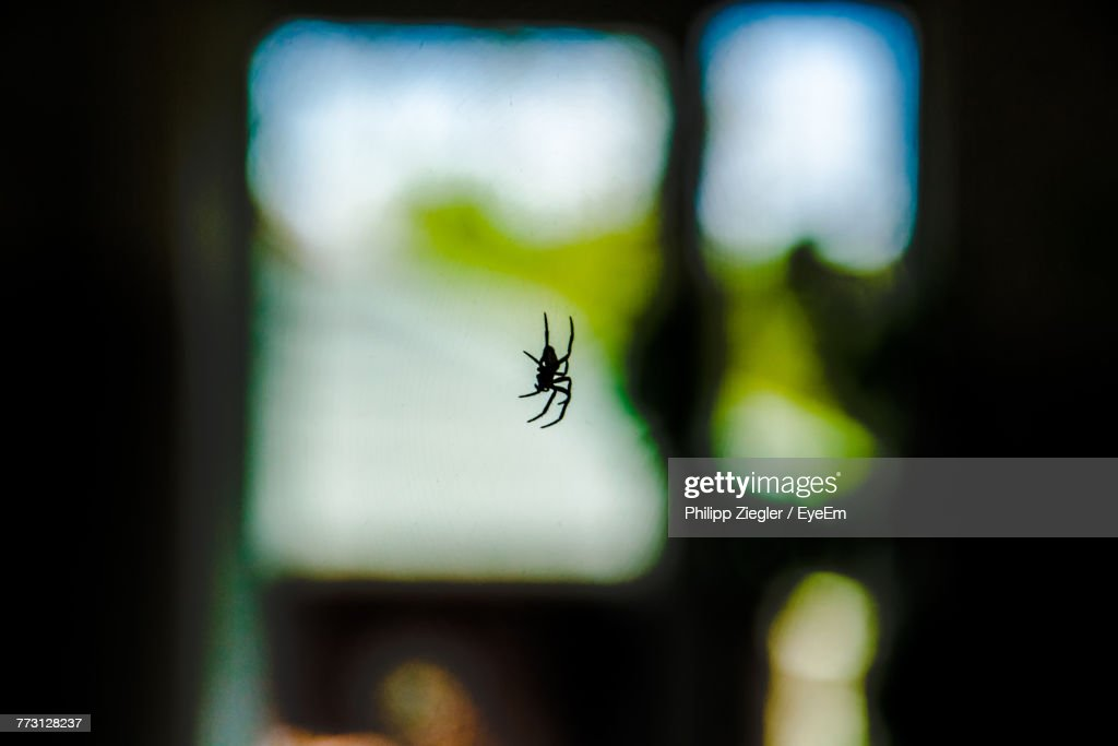 Close-Up Of Spider Against Window : Photo