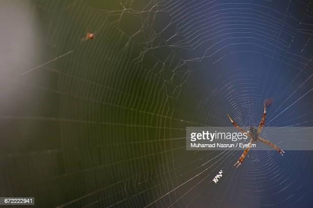 close-up of spider and web - muhamad nasrun stock pictures, royalty-free photos & images