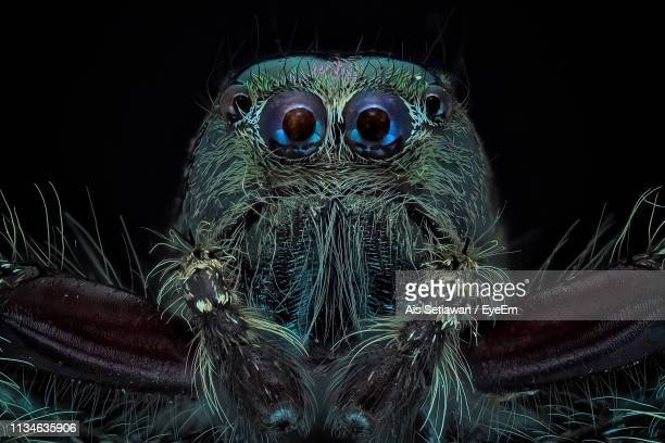close-up of spider at night - spider stock pictures, royalty-free photos & images