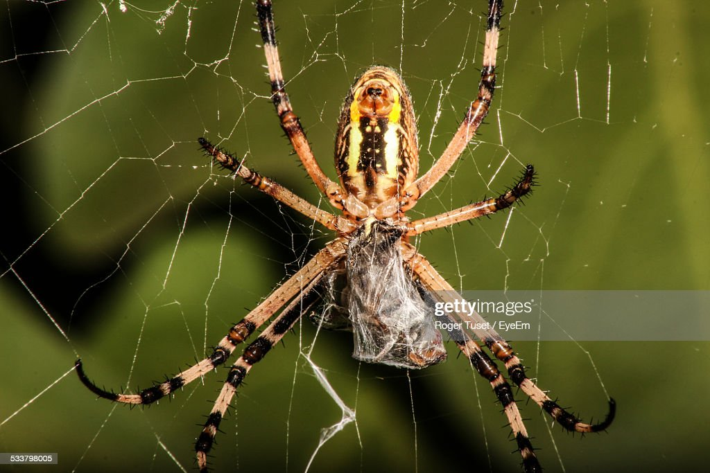 Close-Up Of Spider Eating On Web : Foto stock