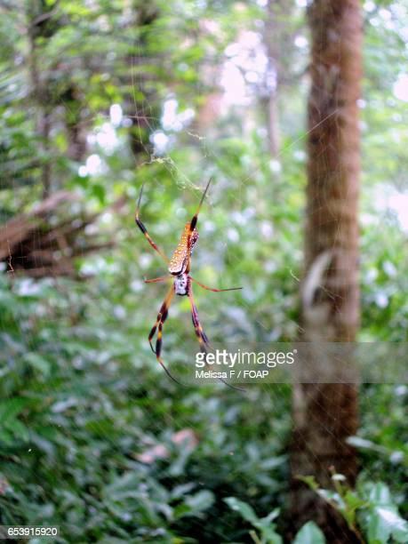 close-up of spider in web - braziliaanse zwerfspin stockfoto's en -beelden