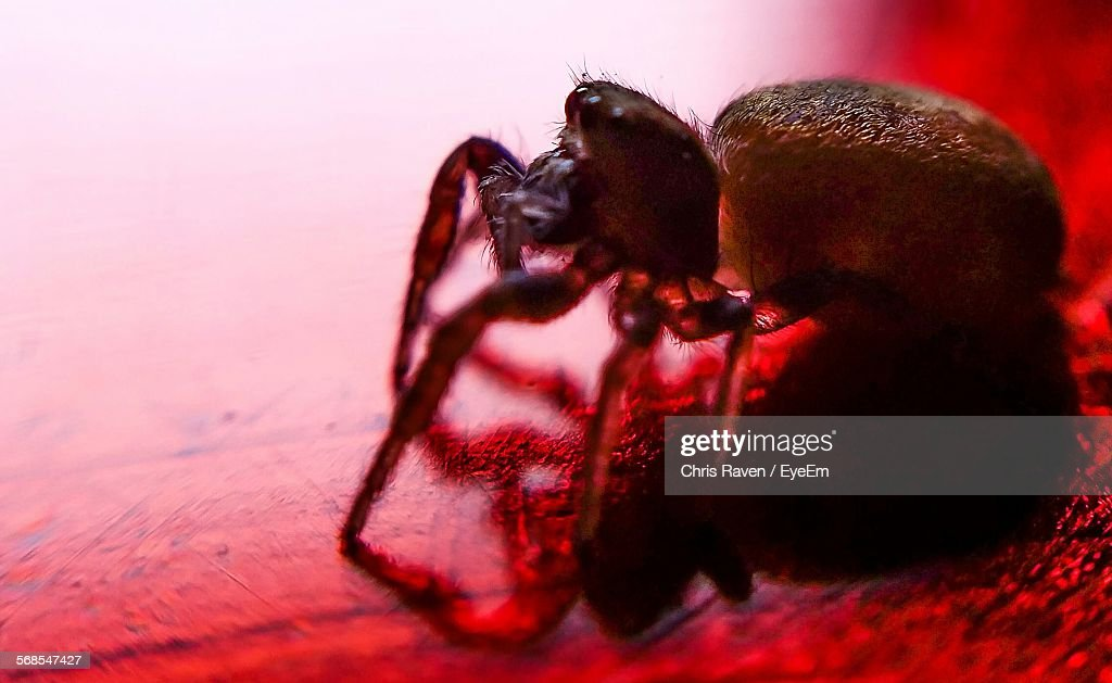 Close-Up Of Spider On Field : Stock Photo