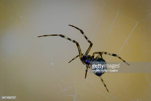 close-up of spider on its web - andres ruffo stock pictures, royalty-free photos & images
